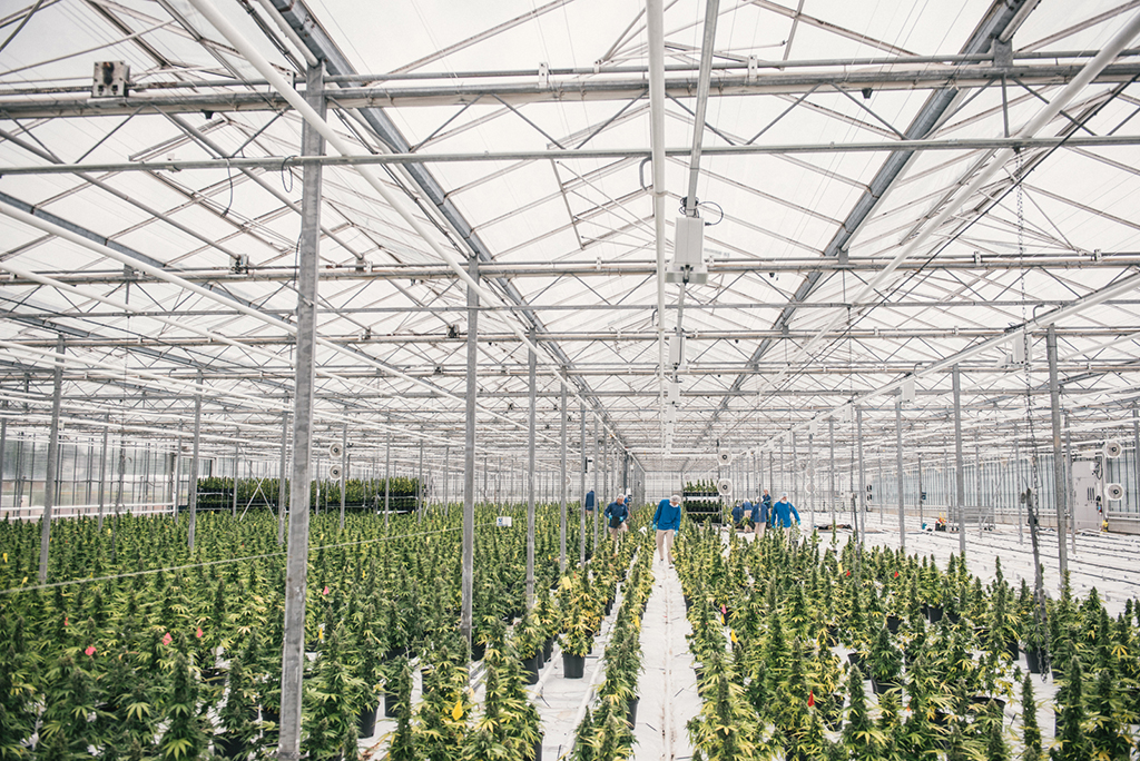 Australia To Get Million Square Foot Cannabis Greenhouse